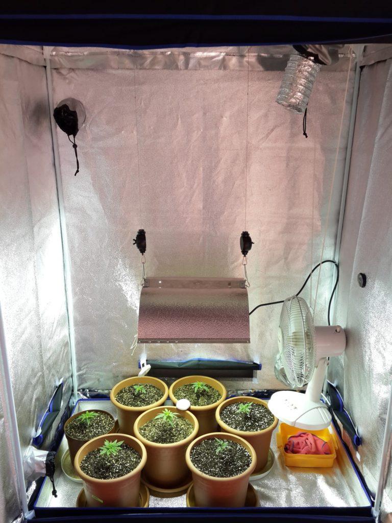 cabina grow box con aspirazione