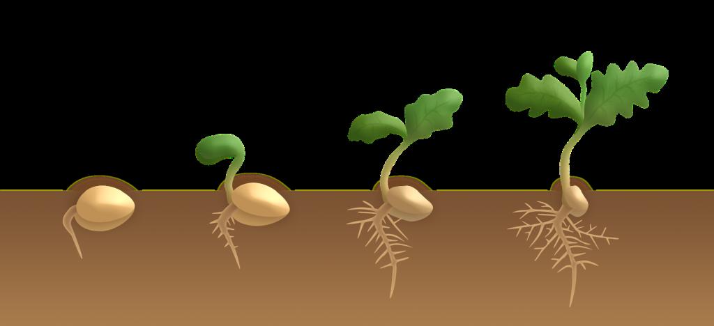 germinazione a terra
