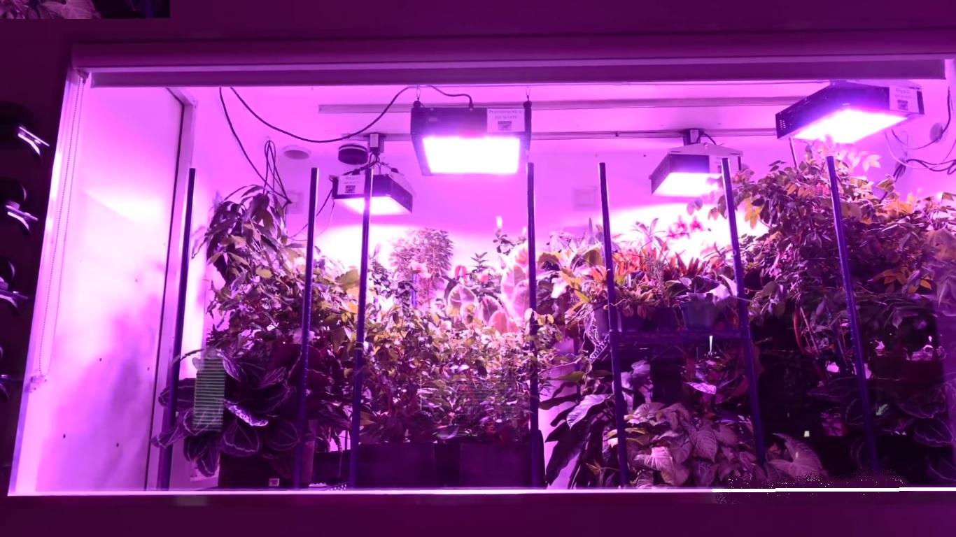 Peperoncino indoor come coltivare idroponico for Luci tubolari a led