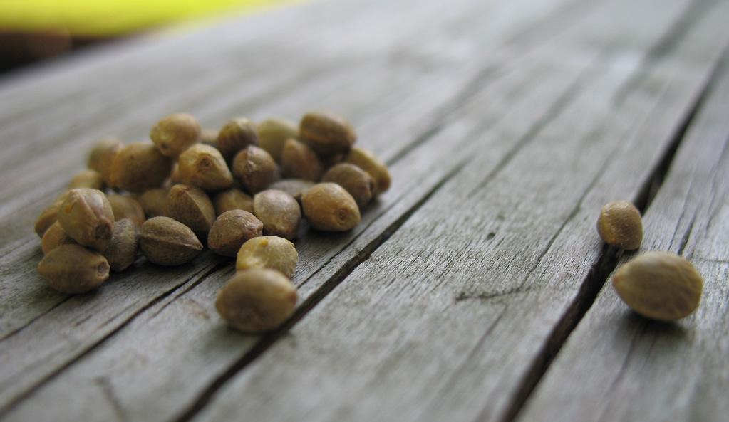 Come funzionano i semi da collezione?