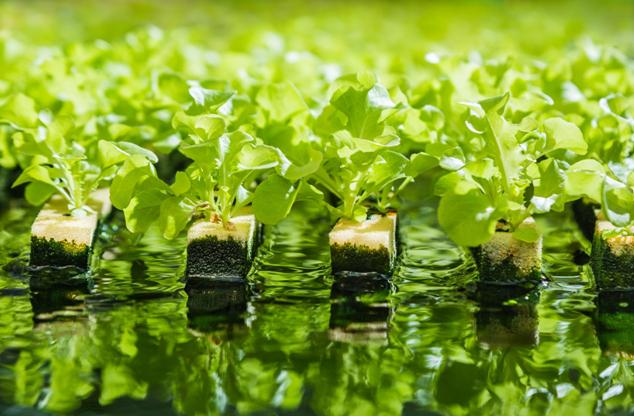 Giardinaggio e Offerte: come trovare codici sconto per il mondo Green