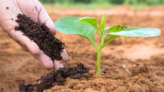 Fertilizzanti Cannabis: la corretta nutrizione della canapa