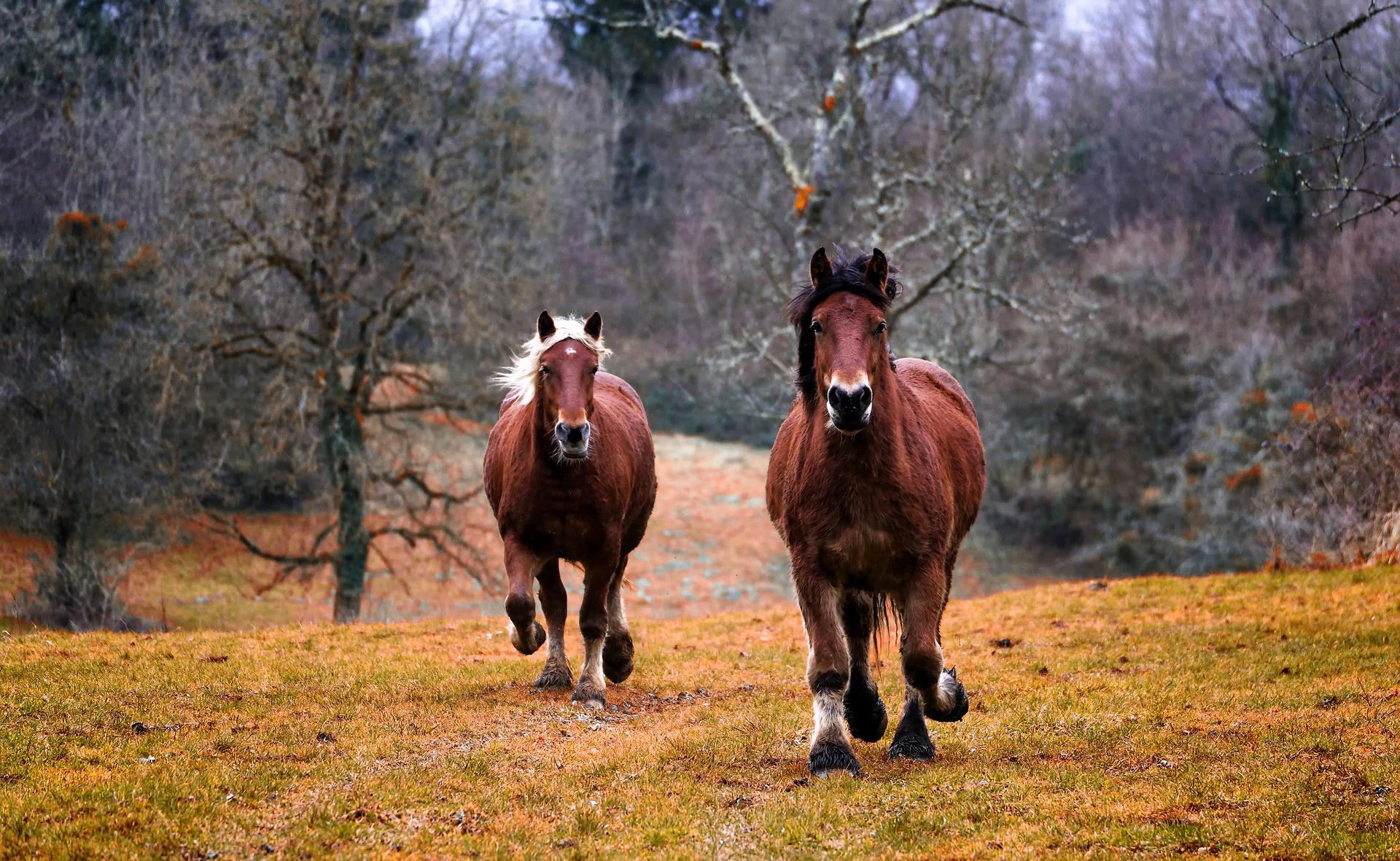 CBD per cavalli