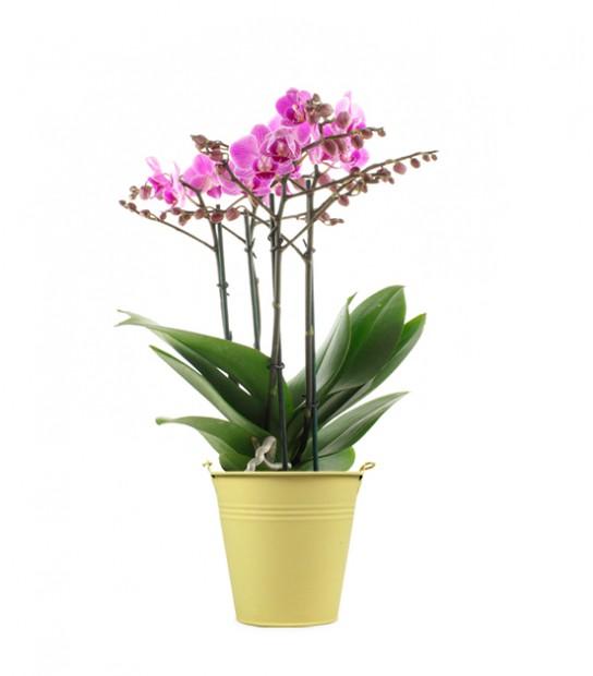 idrogel per coltivare orchidee in casa