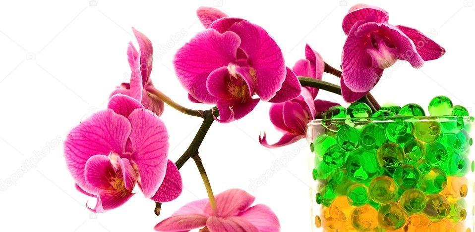 orchidea con idrogel